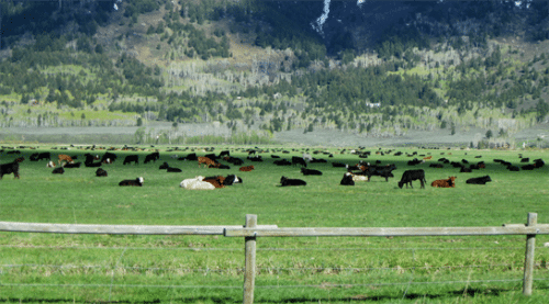 Discover the Ranch event at Snake River Ranch – Buckrail, Jackson Hole News