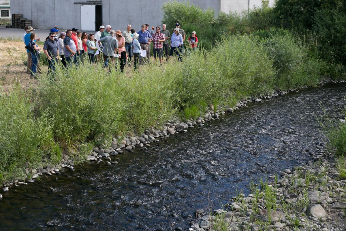 Salmon recovery efforts highlighted in Yakima Basin